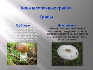 Типы шляпочных грибов Грибы Трубчатые Нижний слой шляпки состоит из многочисл