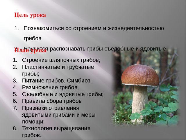 Познакомиться со строением и жизнедеятельностью грибов Научится распознавать...