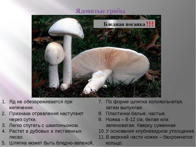 Ядовитые грибы Бледная поганка !!! Яд не обезвреживается при кипячении. Приз...
