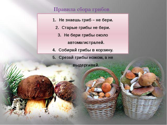Правила сбора грибов Не знаешь гриб – не бери. Старые грибы не бери. Не бери...