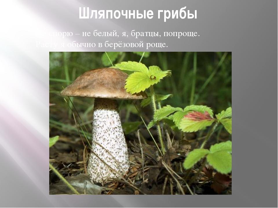 Шляпочные грибы Не спорю – не белый, я, братцы, попроще. Расту я обычно в бер...