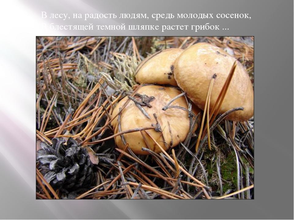 В лесу, на радость людям, средь молодых сосенок, В блестящей темной шляпке р...