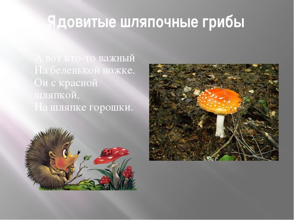 Ядовитые шляпочные грибы А вот кто-то важный На беленькой ножке. Он с красной...