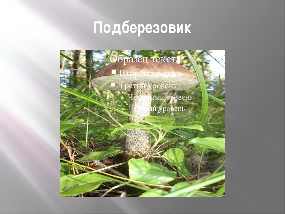 Подберезовик