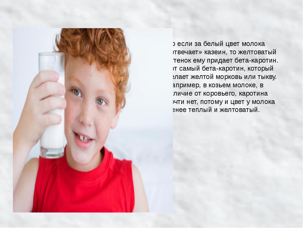 Но если за белый цвет молока «отвечает» казеин, то желтоватый оттенок ему при...