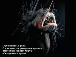 Глубоководные рыбы С помощью ультразвука определяют расстояния, находят пищу