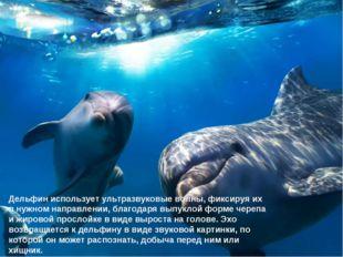 Дельфин использует ультразвуковые волны, фиксируя их в нужном направлении, бл