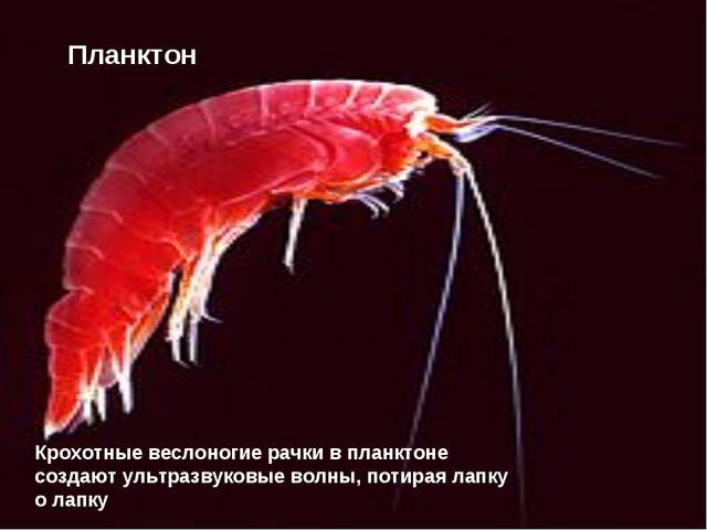 Крохотные веслоногие рачки в планктоне создают ультразвуковые волны, потирая...