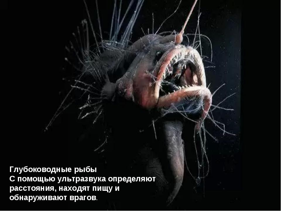 Глубоководные рыбы С помощью ультразвука определяют расстояния, находят пищу...