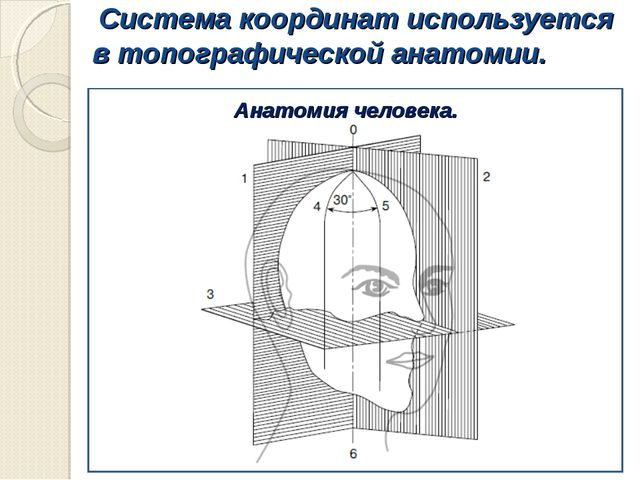 Система координат используется в топографической анатомии. Анатомия человека.
