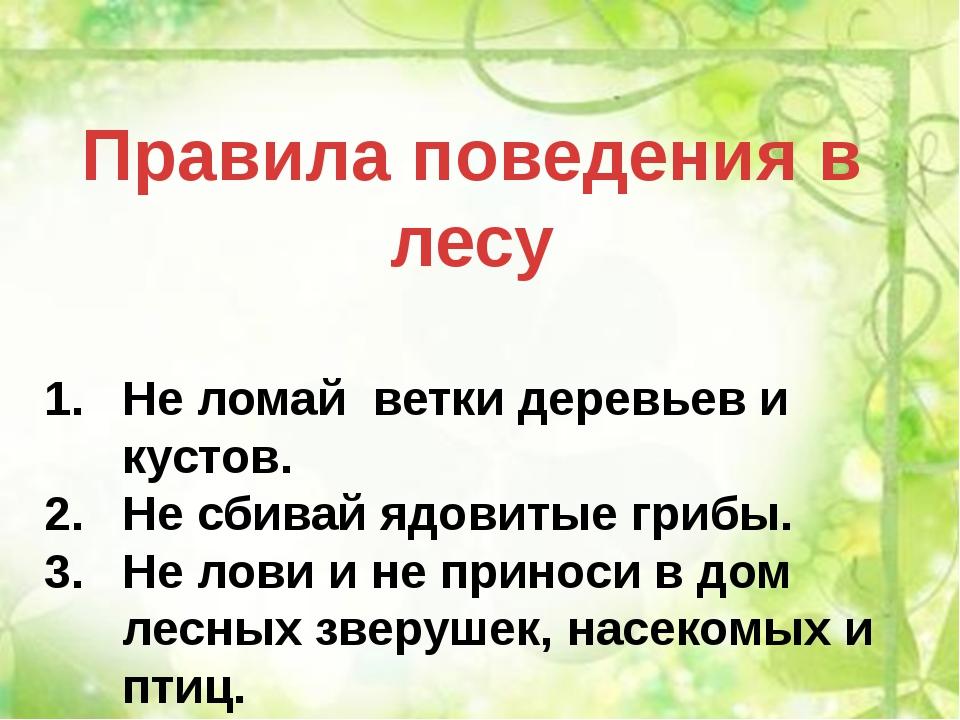 Правила поведения в лесу Не ломай ветки деревьев и кустов. Не сбивай ядовитые...
