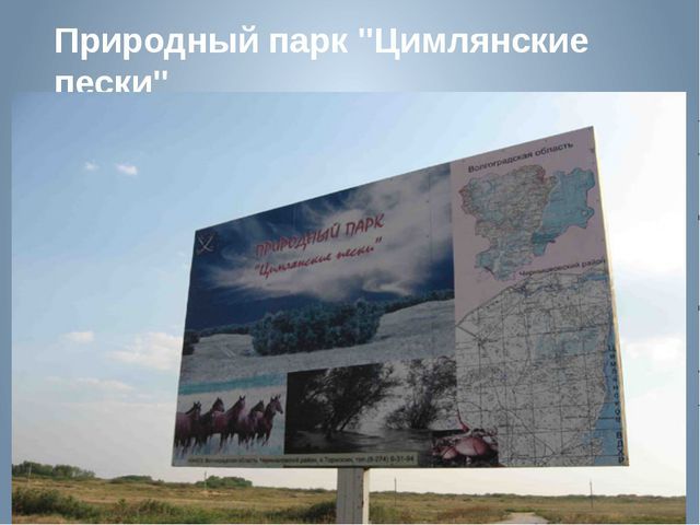 """Природный парк """"Цимлянские пески"""""""