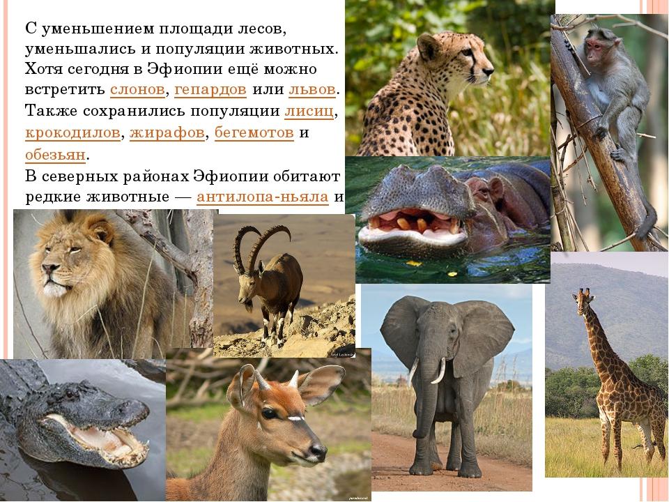 С уменьшением площади лесов, уменьшались и популяции животных. Хотя сегодня в...