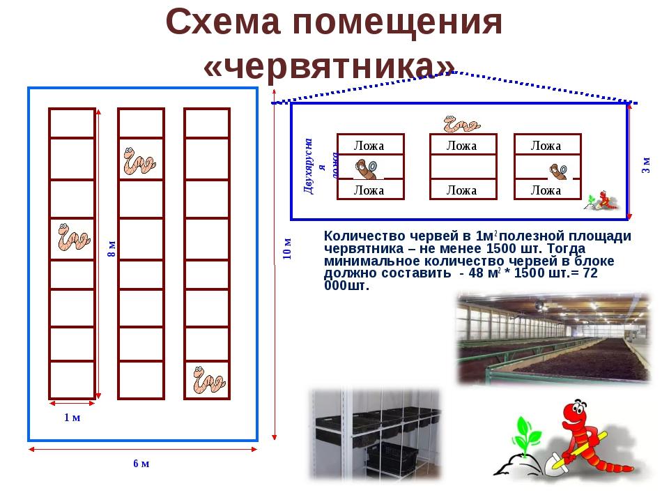 Схема помещения «червятника» Количество червей в 1м 2 полезной площади червя...