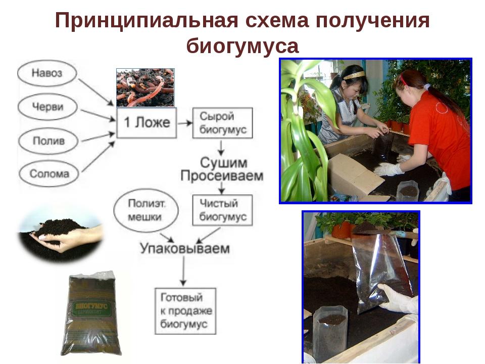 Принципиальная схема получения биогумуса