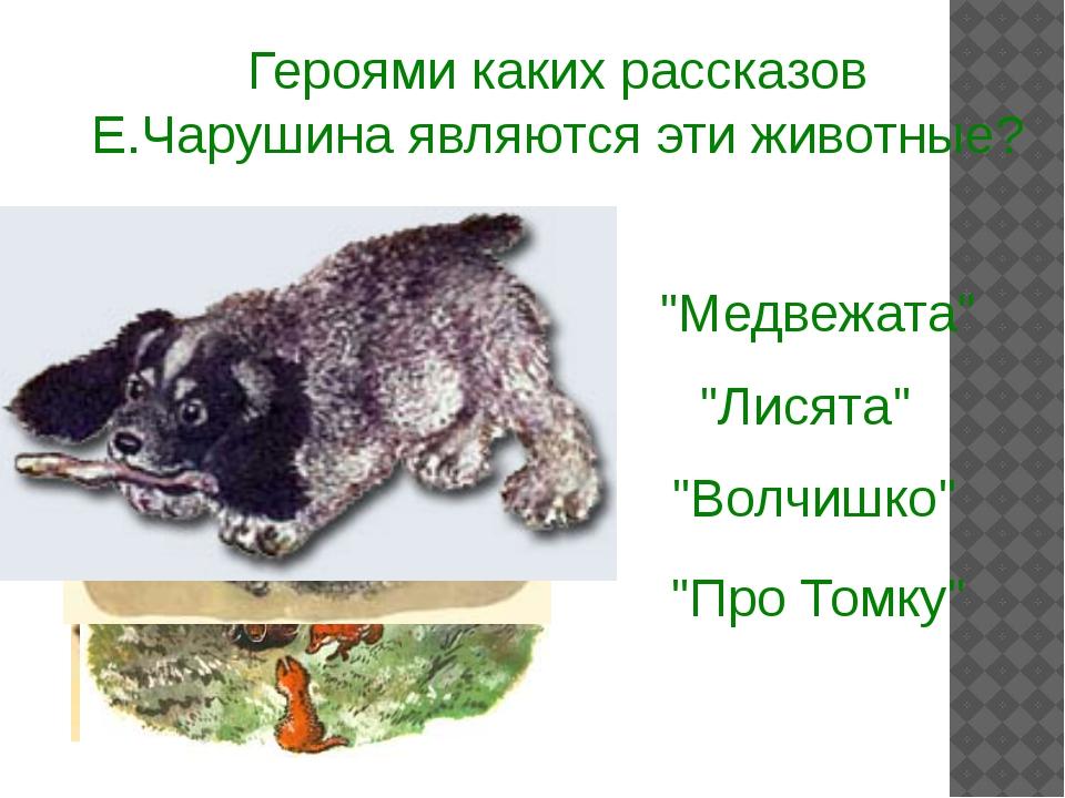 """Героями каких рассказов Е.Чарушина являются эти животные? """"Медвежата"""" """"Про То..."""