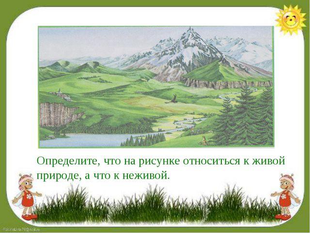 Определите, что на рисунке относиться к живой природе, а что к неживой.