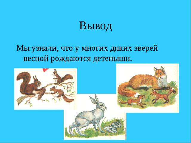 Вывод Мы узнали, что у многих диких зверей весной рождаются детеныши.