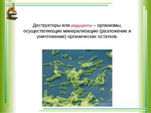 Деструкторы или редуценты – организмы, осуществляющие минерализацию (разложе