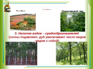 4. Тип сообщества Тундра Тропический лес 5. Наличие видов – средообразовател