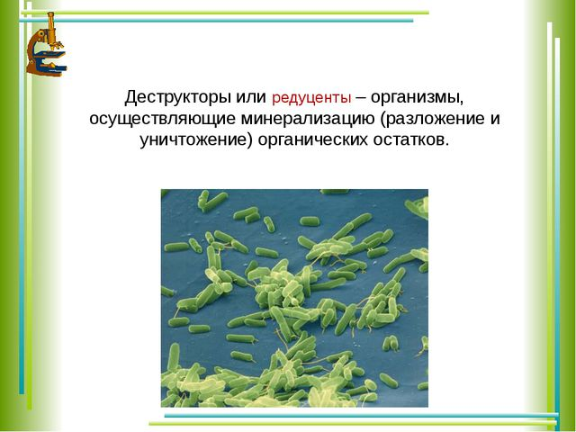 Деструкторы или редуценты – организмы, осуществляющие минерализацию (разложе...