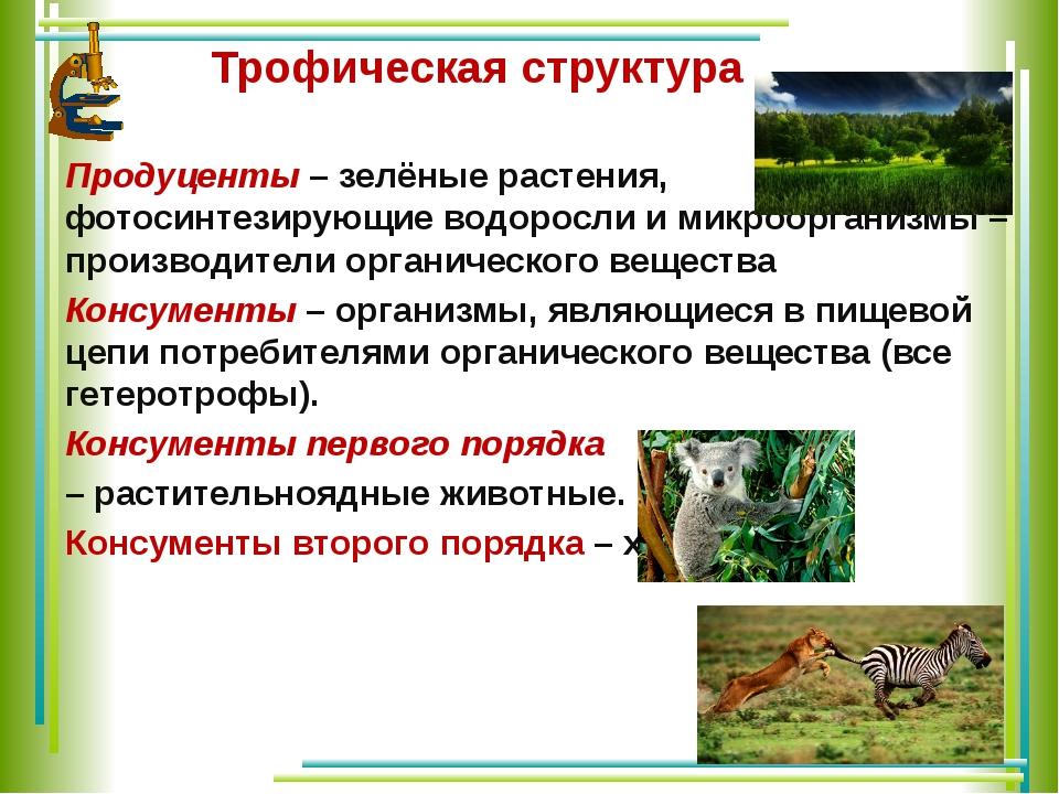 Трофическая структура Продуценты – зелёные растения, фотосинтезирующие водор...