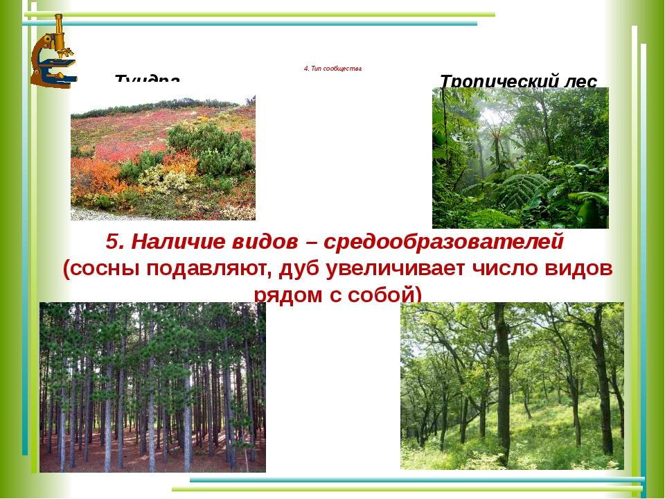 4. Тип сообщества Тундра Тропический лес 5. Наличие видов – средообразовател...
