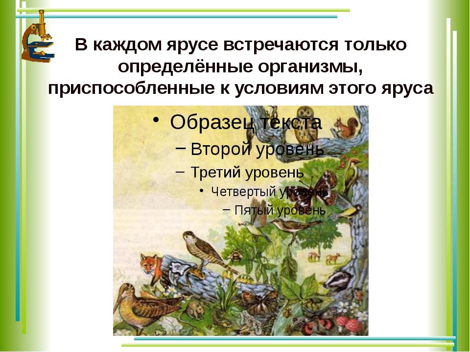 В каждом ярусе встречаются только определённые организмы, приспособленные к у...