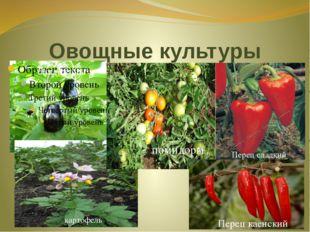Овощные культуры баклажаны картофель помидоры Перец сладкий Перец каенский