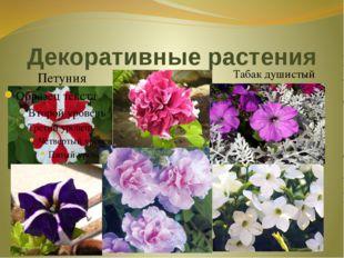 Декоративные растения Петуния Табак душистый