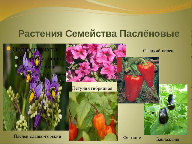Растения Семейства Паслёновые Паслён сладко-горький Петуния гибридная Физалис...