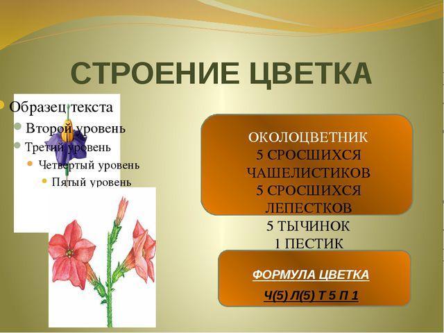 СТРОЕНИЕ ЦВЕТКА ОКОЛОЦВЕТНИК 5 СРОСШИХСЯ ЧАШЕЛИСТИКОВ 5 СРОСШИХСЯ ЛЕПЕСТКОВ 5...