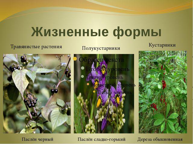 Жизненные формы Травянистые растения Паслён черный Полукустарники Паслён слад...