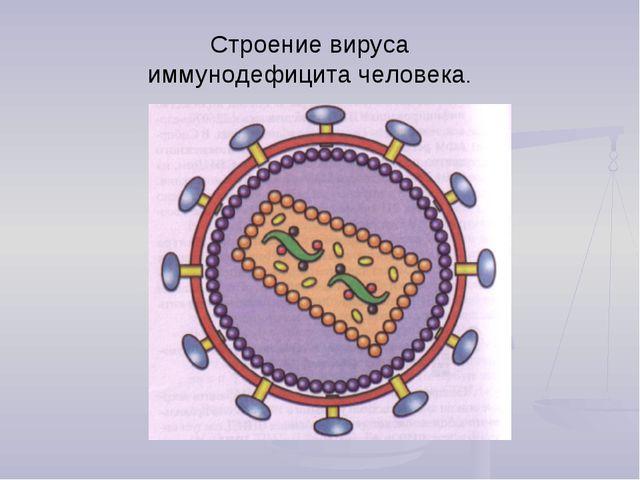 Строение вируса иммунодефицита человека.