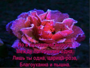 Но в дуновении мороза Между погибшими одна, Лишь ты одна, царица-роза, Благоу