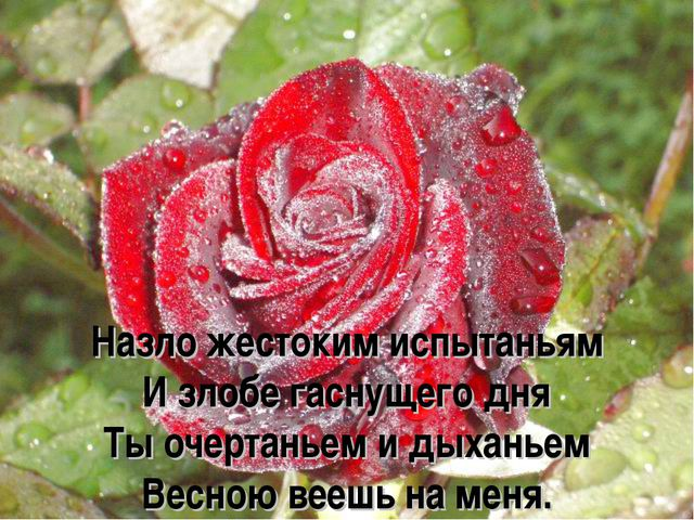 Назло жестоким испытаньям И злобе гаснущего дня Ты очертаньем и дыханьем Весн...