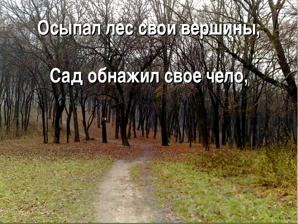 Осыпал лес свои вершины, Сад обнажил свое чело,