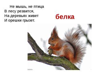 Не мышь, не птица В лесу резвится, На деревьях живет И орешки грызет. белка