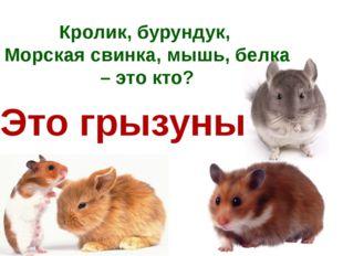 Кролик, бурундук, Морская свинка, мышь, белка – это кто? Это грызуны