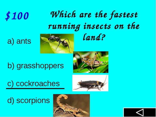 $100 Which are the fastest running insects on the land? a) ants b) grasshopp...