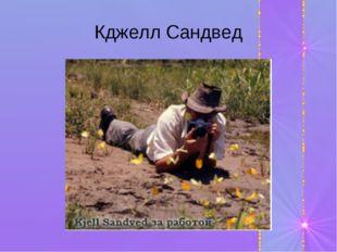 Кджелл Сандвед