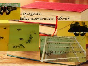 Наши экскурсии. Выставка экзотических бабочек