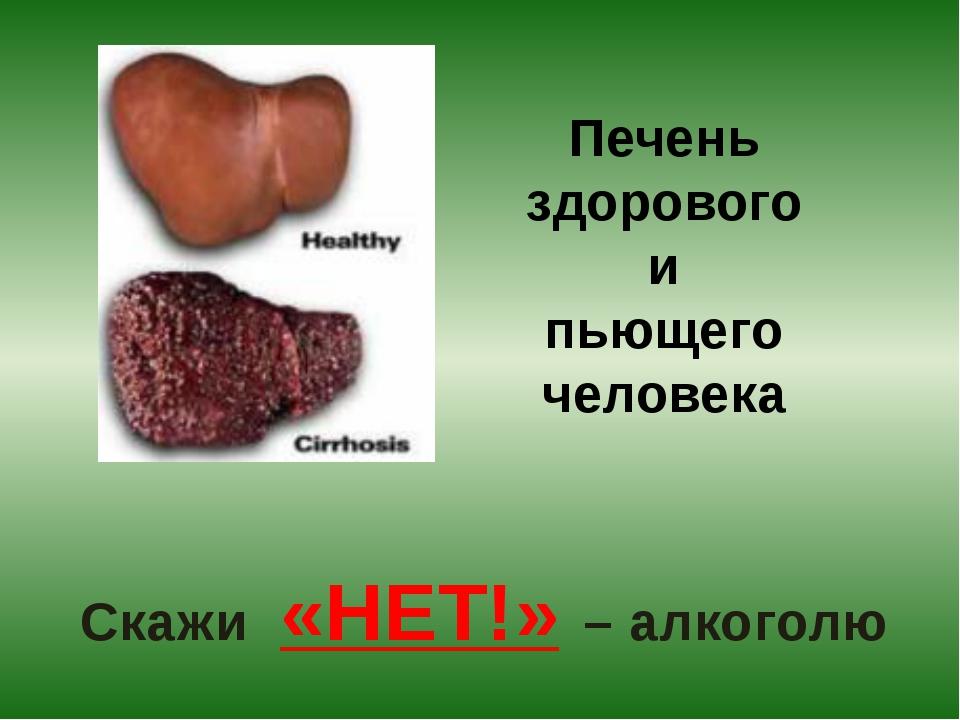 Печень здорового человека и пьющего