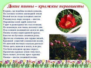 Дикие пионы – крымские первоцветы В краю, где подобны волнам ковыли, На склон