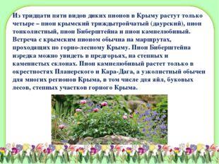 Из тридцати пяти видов диких пионов в Крыму растут только четыре – пион крымс