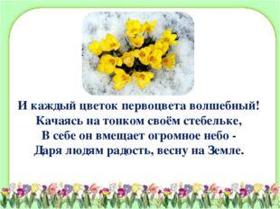 И каждый цветок первоцвета волшебный! Качаясь на тонком своём стебельке, В се