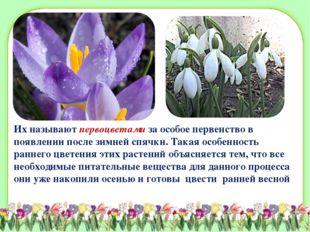 Их называют первоцветами за особое первенство в появлении после зимней спячки