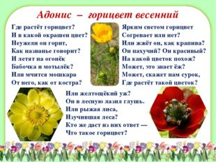 Адонис – горицвет весенний Где растёт горицвет? И в какой окрашен цвет? Неуже