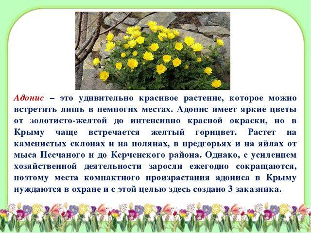 Адонис – это удивительно красивое растение, которое можно встретить лишь в не...