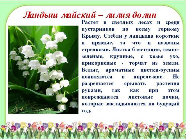 Ландыш майский – лилия долин Растет в светлых лесах и среди кустарников по вс...